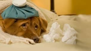 Die besten Hausmittel bei Erkältung
