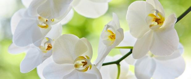 Orchideen richtig gepflegt